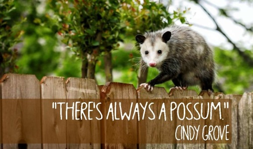 Theres always a possum