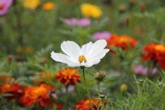 nature-flowers-plant-blossom-65965
